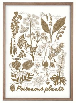 Summer Will Be Back Poster Poisonous Plants