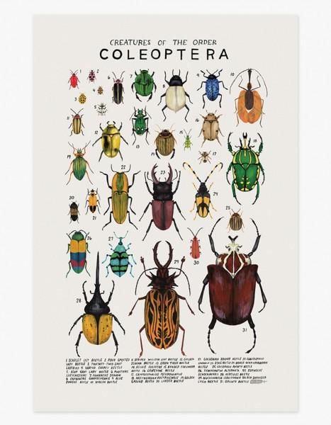 Kelzuki Poster Coleoptera Käfer