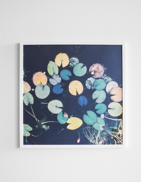 Fine little day Poster Water Lilies