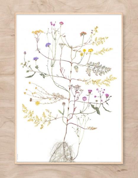 Lotta Olsson Poster Summer Tree