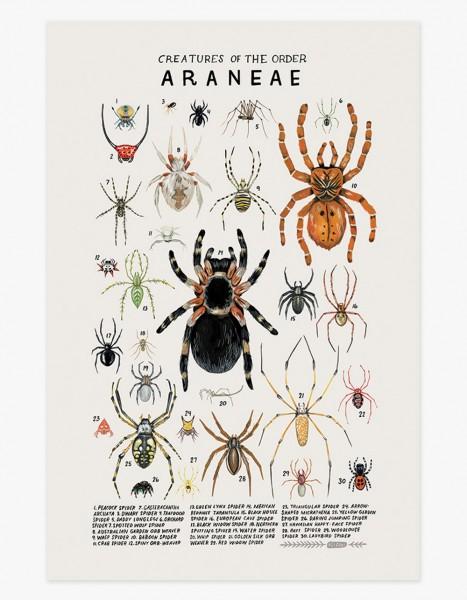 Kelzuki Poster Araneae Spinnen