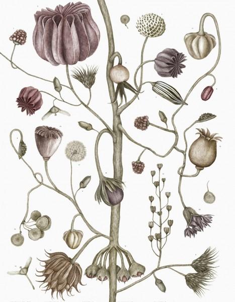 Jonna Fransson Seeds