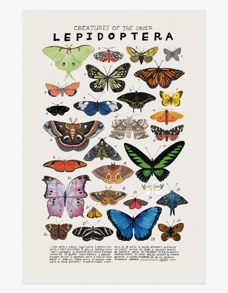 Kelzuki Poster Lepidoptera Schmetterlinge